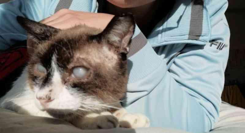 Após ser abandonado, gatinho idoso é adotado e ganha vida nova