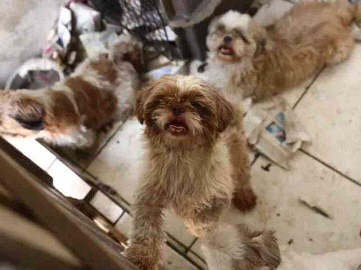 Animais resgatados de canil clandestino aguardam decisão judicial para doação em Santa Bárbara d'Oeste, SP