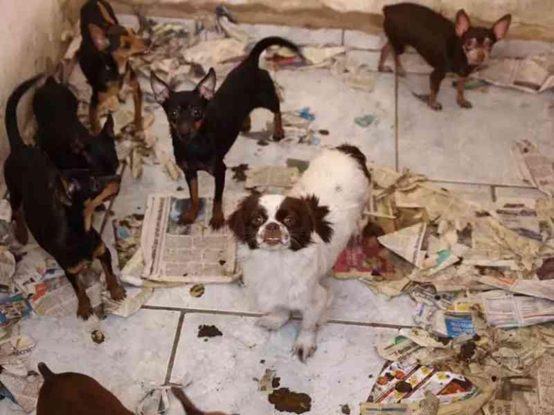 Em Santa Bárbara d'Oeste (SP), imóvel abrigava 37 animais em condições precárias