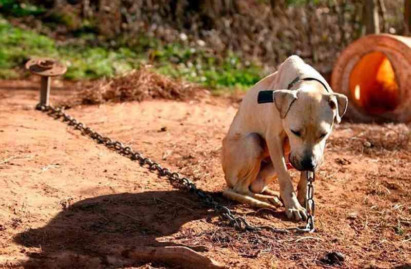 Santos (SP) sanciona lei que proíbe acorrentar e aprisionar animais domésticos
