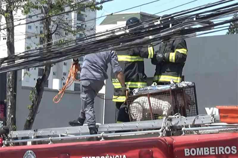 Pit bull leva duas facadas após morder irmão do tutor em Santo André, SP
