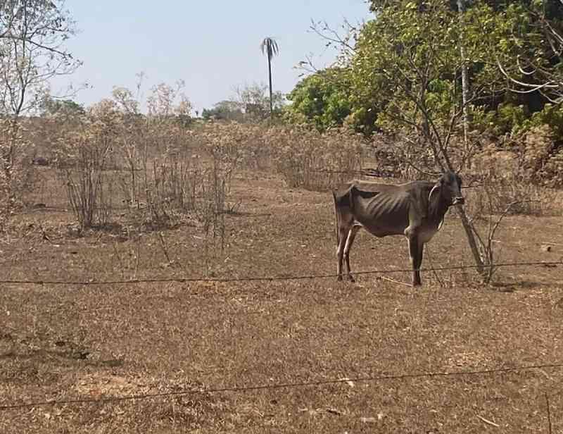 Polícia flagra bois debilitados e mortos em propriedade rural de Urupês, SP