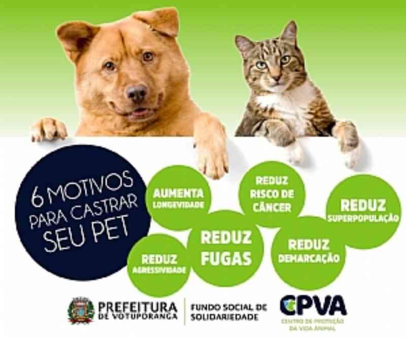 Prefeitura de Votuporanga (SP) abre inscrições para castração de cães e gatos entre os dias 14 e 17 de setembro