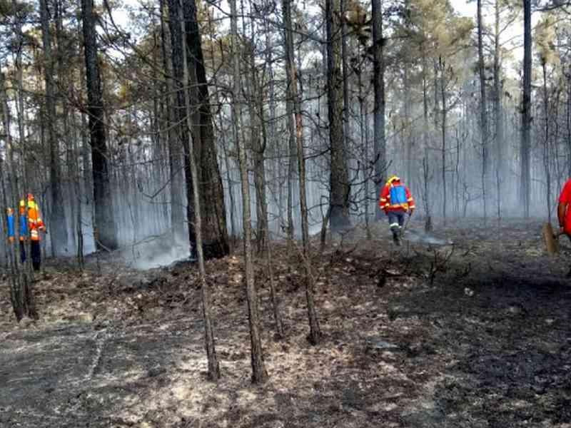 Incêndios florestais em SP mais do que dobram em 2020; animais fogem do fogo, invadem áreas urbanas e nº de resgates aumenta