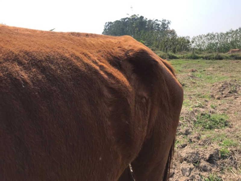 Animais em situação de maus-tratos foram encontrados em propriedade de Quadra (SP) — Foto: Polícia Militar Ambiental/Divulgação