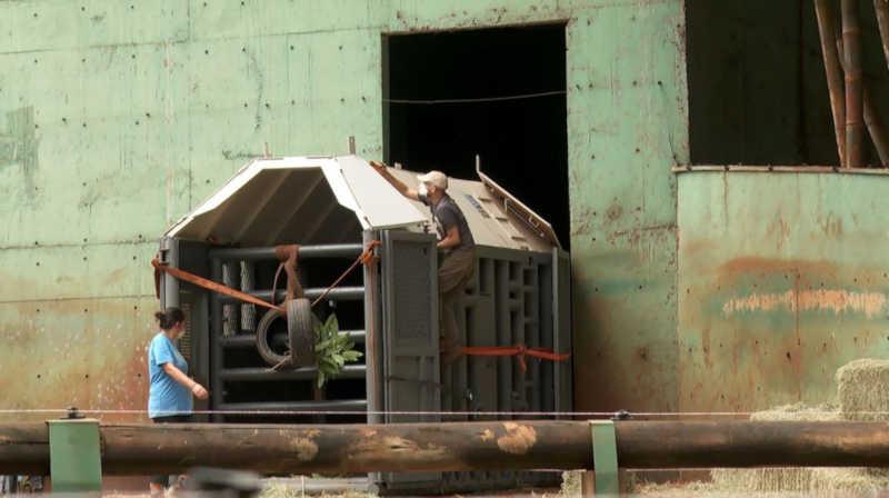 Caixa onde a elefanta Bambi será transportada foi acoplada ao recinto onde ela vive em Ribeirão Preto, SP — Foto: Carlos Trinca/EPTV