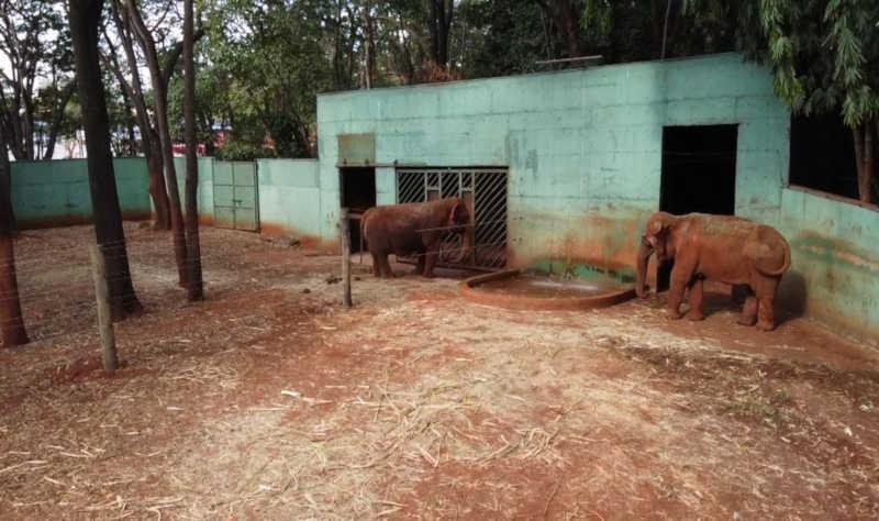 Cerca divide as elefantas Maison e Bambi no bosque de Ribeirão Preto, SP — Foto: Marcelo Moraes / EPTV
