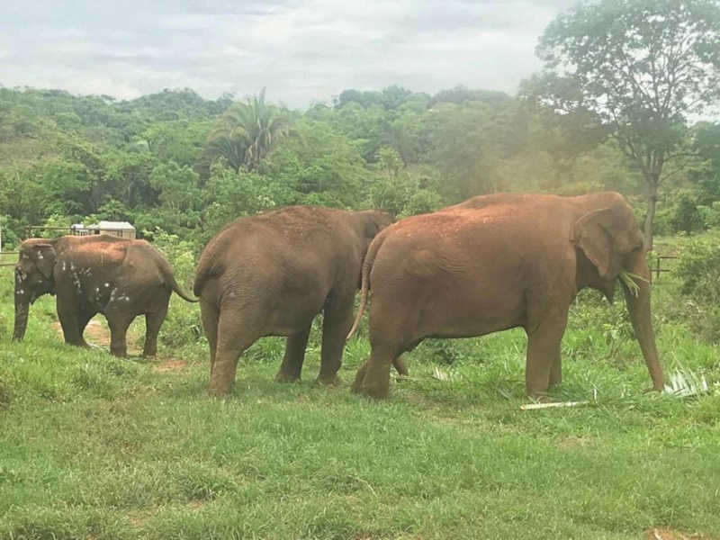 Moradores do Santuário de Elefantes do Brasil (SEB), nova casa da elefanta Bambi — Foto: SEB/Divulgação