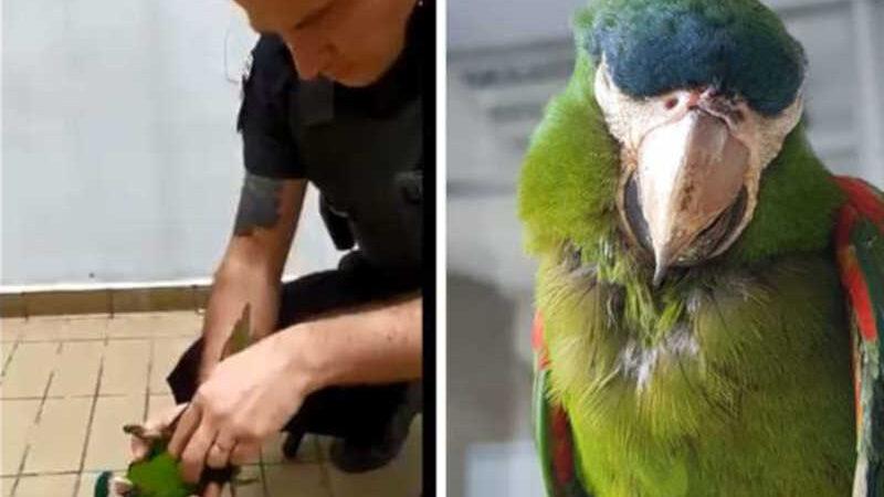 Reprodução Metrô SP/Divulgação Animal foi encontrado na área externa da estação Oratório