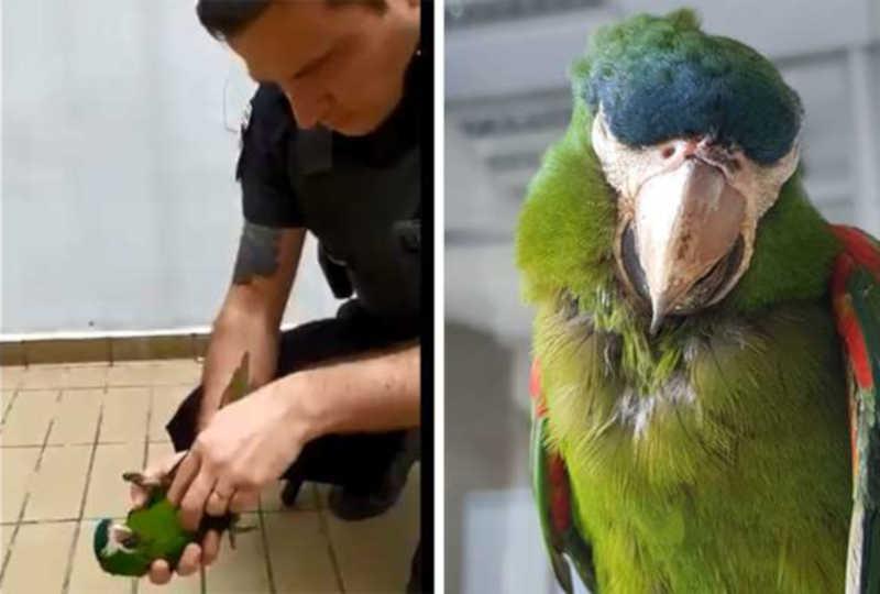 Vídeo: segurança do Metrô de SP reanima papagaio após animal tomar choque