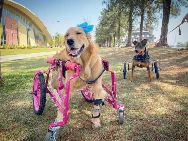 Guerreiro também conheceu a Olívia nesta sexta-feira (4) durante a entrega da cadeira de rodas — Foto: Arquivo Pessoal/Mariana Camargo