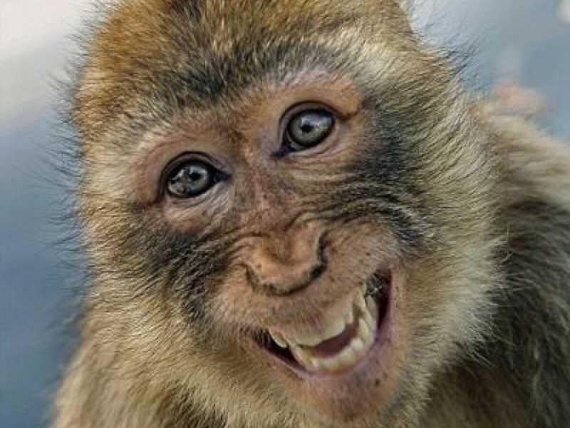 Região suíça votará para incluir direitos dos primatas não humanos na Constituição
