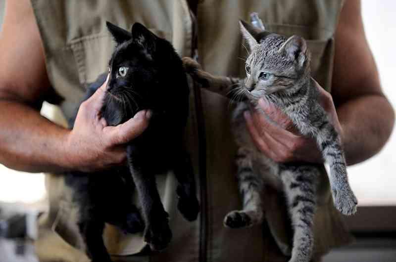 Senado votará aumento de pena para quem ferir cães e gatos na próxima terça