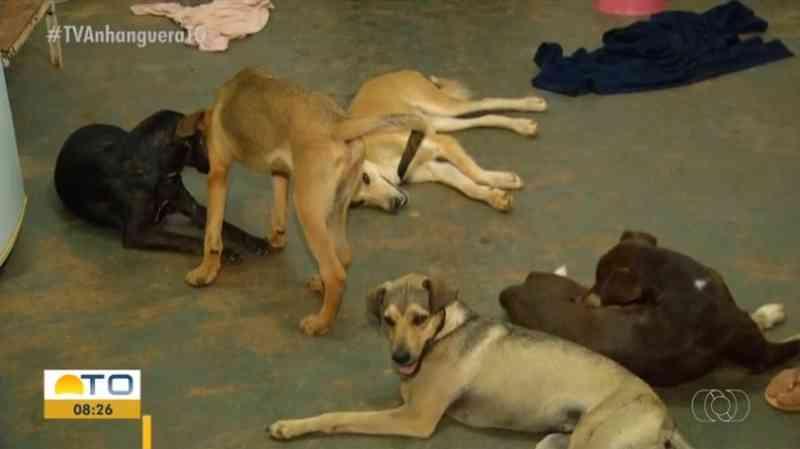 ONGs que resgatam animais das ruas sofrem com a falta de doações durante pandemia em Palmas, TO