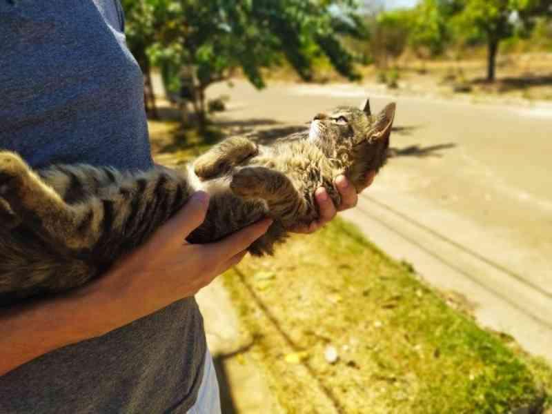 Projeto voluntário de proteção animal é desenvolvido no Naturatins