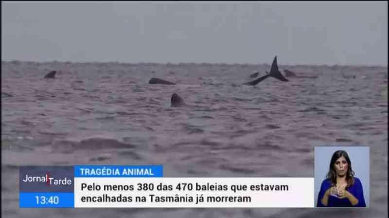 Já morreram 380 baleias que encalharam na Tasmânia