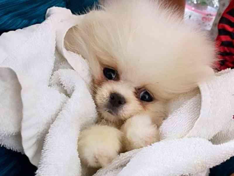 Cão caríssimo comprado pela internet chega doente e morre em poucos dias