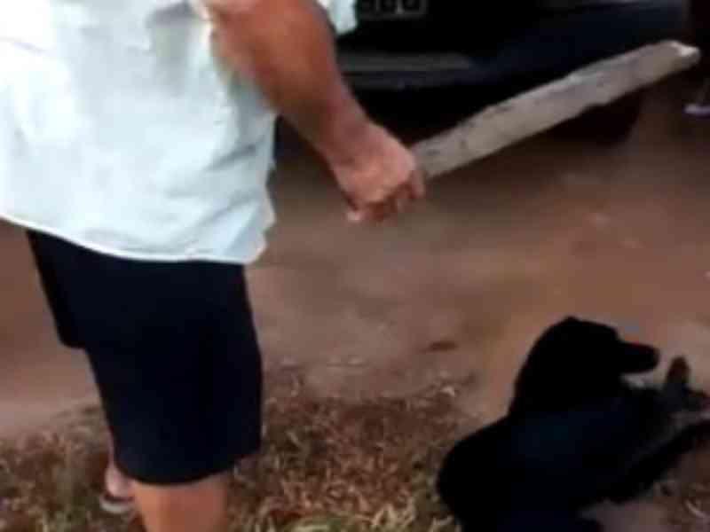 Homem é preso após agredir cachorro a pauladas no bairro de Bebedouro, em Maceió, AL