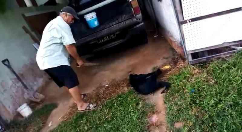 Justiça decide manter preso homem flagrado tentando matar cachorro a pauladas em Maceió, AL