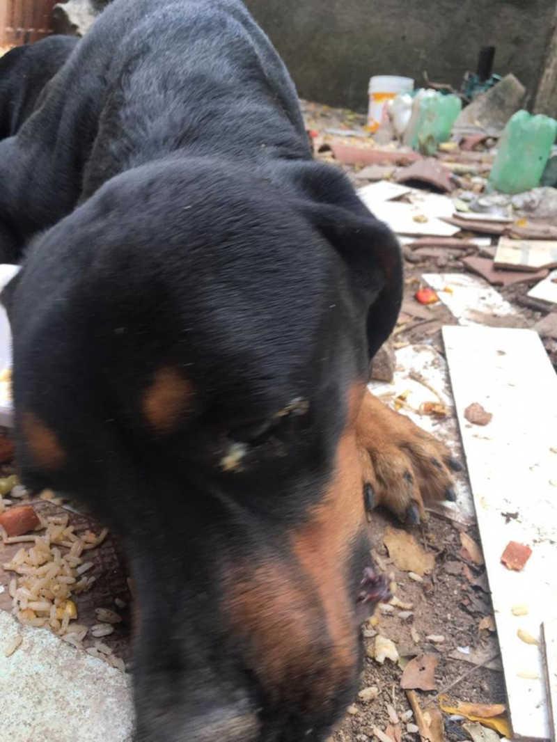 Animal foi levado para clínica veterinária e responsável deverá pagar todo custo do tratamento — Foto: Comissão de Bem Estar Animal/ OAB-AL