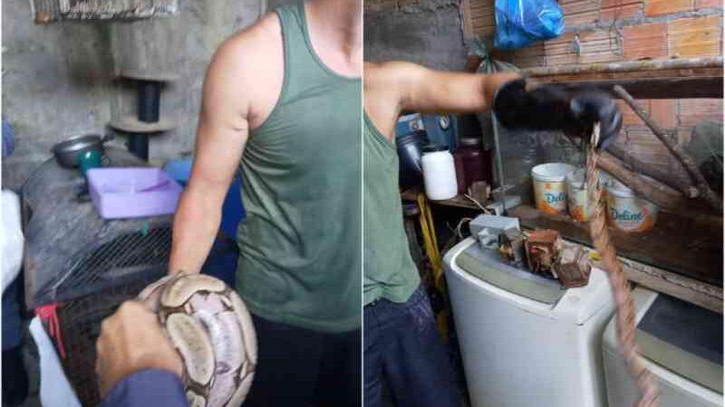 Homem é detido com jabutis e jiboias na zona Leste de Manaus, AM