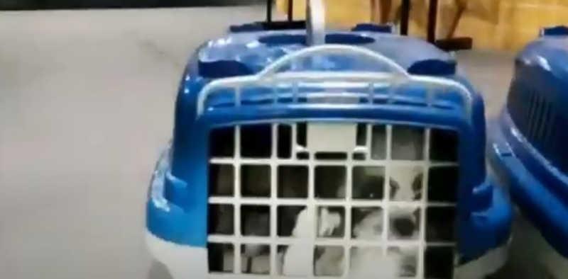 Cachorros estavam amontoados em caixas, sem alimentação e cobertos de fezes e urina — Foto: PRF/ Divulgação