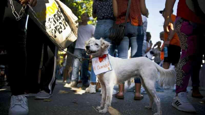 Cuba vai ter a sua primeira lei de proteção animal