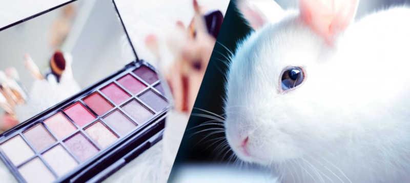 Projeto de lei proíbe utilização de animais em pesquisa de produtos no Distrito Federal