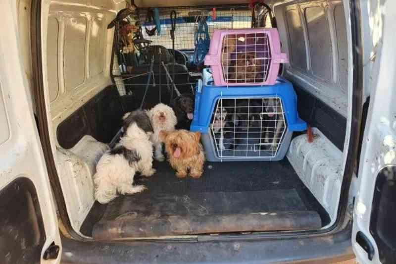 Justiça suspende lei que criou o Samu para resgate de animais no DF