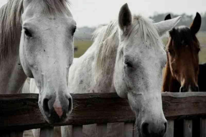 Secretaria cria projeto para adoção de animais de grande porte no DF