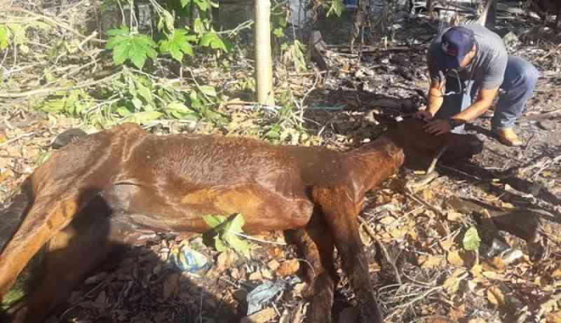 Vítima de maus-tratos, égua morre em Guarapari (ES) e grupo de proteção animal cobra punição