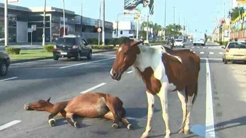 Após cavalo ser atropelado em Vila Velha (ES), animal 'vela amigo'