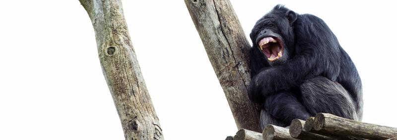 Por que devemos dar consideração moral a indivíduos em vez de espécies