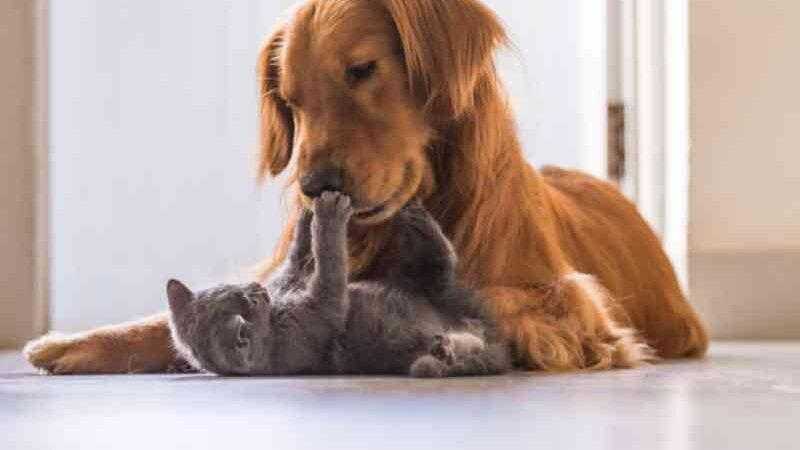 Entenda o que é a senciência animal e qual a discussão em torno da mesma
