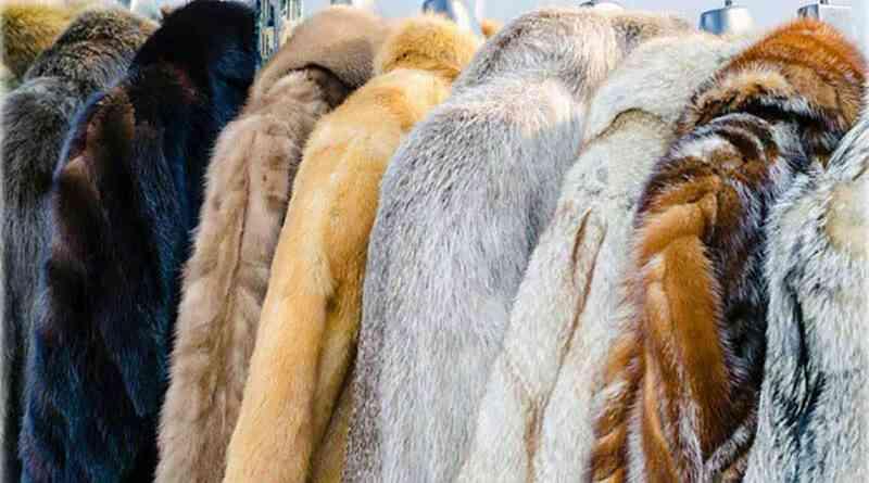 Projeto quer proibir comércio de peles de animais em Israel