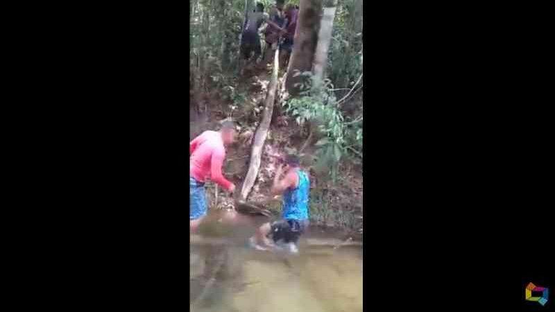 Identificados quatro suspeitos de terem matado sucuri de 7m no rio Una, em Morros, MA