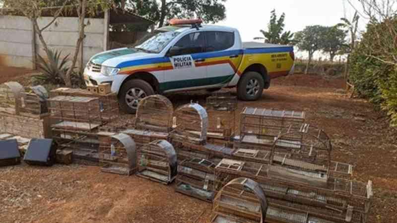 Rapaz é detido e multado em mais de R$ 63 mil após se flagrado com pássaros da fauna silvestre em Capitólio, MG