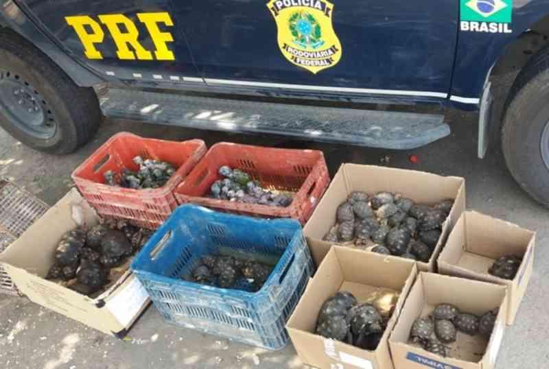 Polícia resgata papagaios, jabutis e cágados do tráfico de animais no interior de Minas