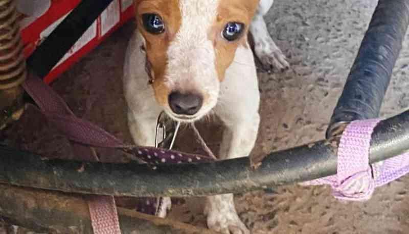 Homem é preso por deixar cães em meio a fezes e urina, em Bonito, MS