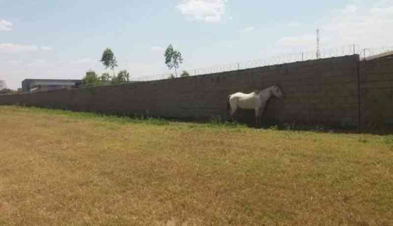 Cavalo sofre amarrado embaixo de intenso sol em cidade de MS e população denuncia