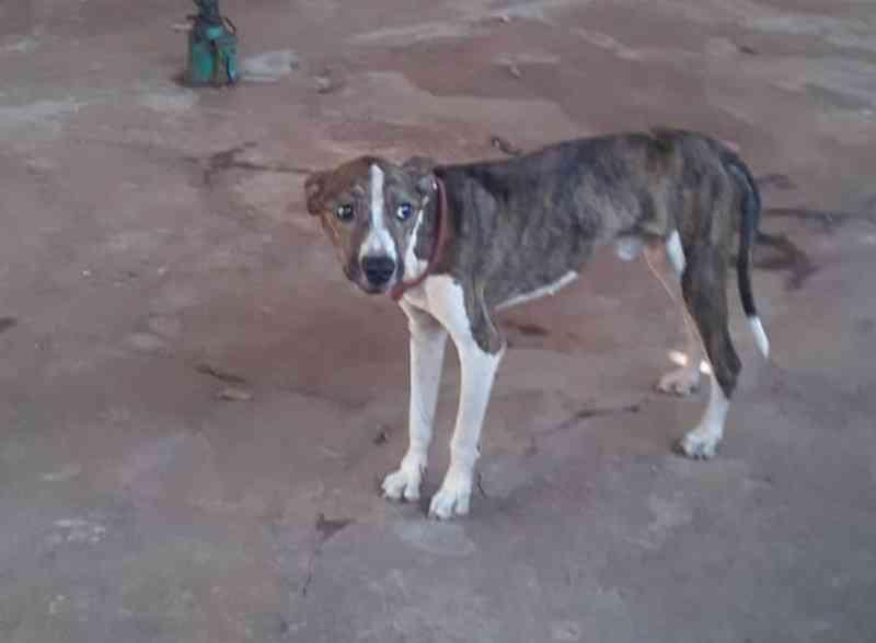 PMA de Batayporã autua morador de Nova Andradina (MS) por maus-tratos contra cachorro