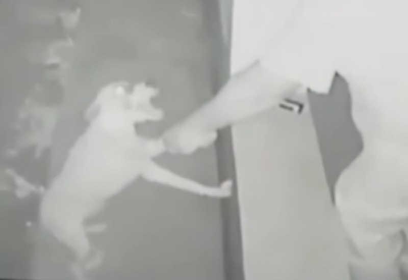 Homem agride com cinto e dá tiro em cachorro em sítio de MS; veja vídeo: 'Ele atrai para depois espancar'