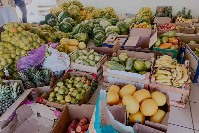 Voluntários arrecadam 1 tonelada de comida para animais do Pantanal