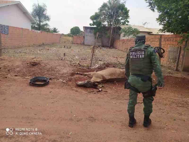 PM encontra burro agonizando e suspeito é preso por maus-tratos em Barra do Bugres, MT