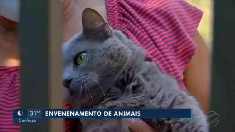 Moradores encontram 15 gatos mortos por suspeita de envenenamento em Tangará da Serra, MT