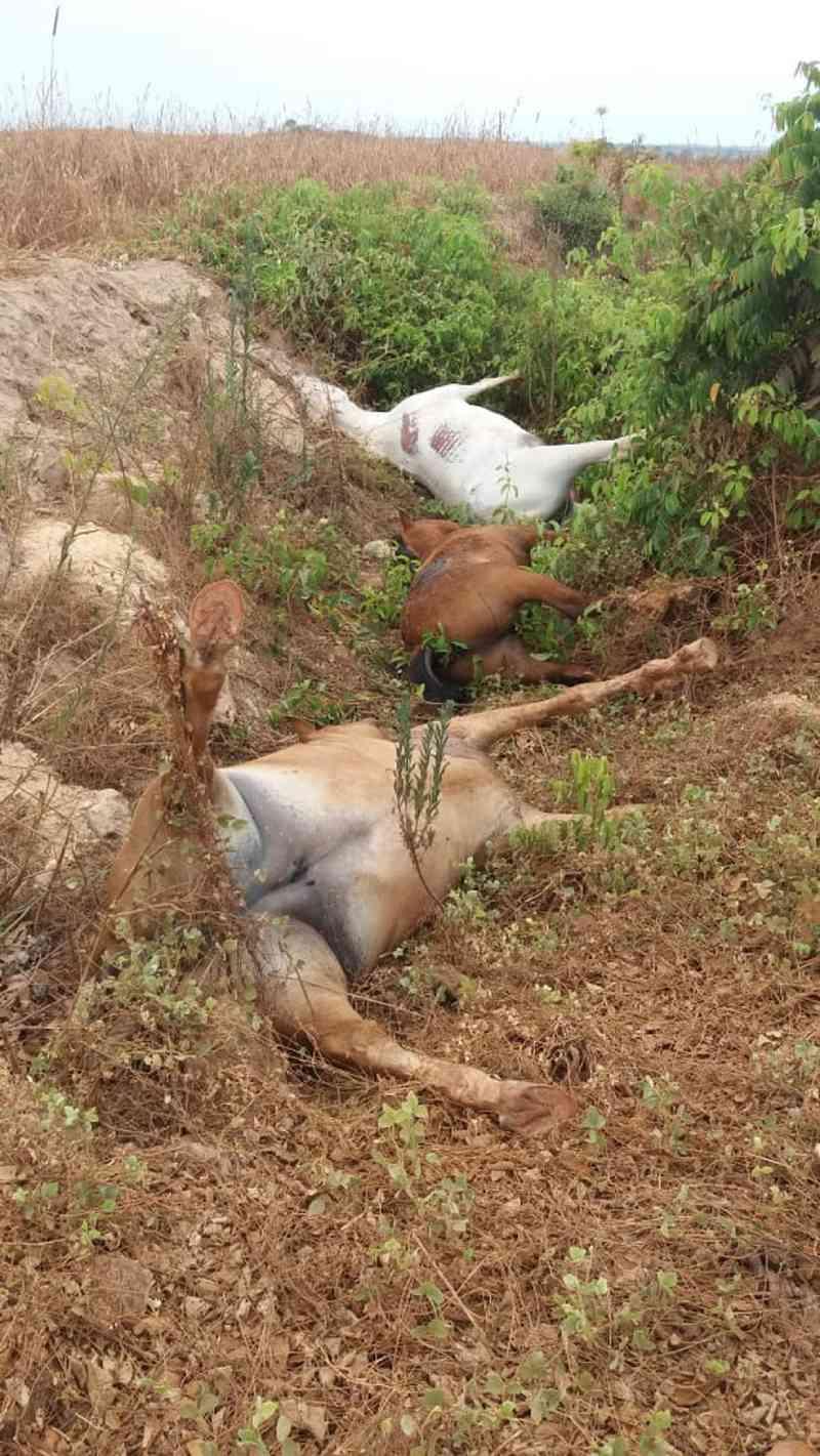 Cinco cavalos que estavam na beira de rodovia após fogo em fazenda são mortos a tiros em MT