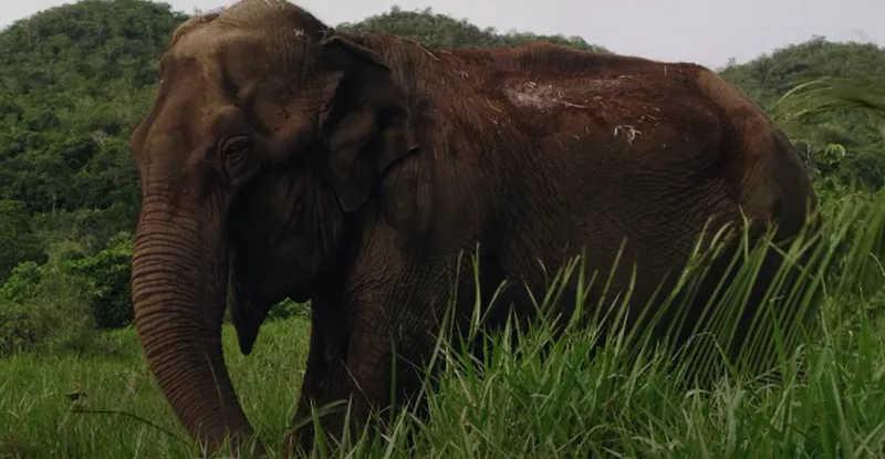 Elefante Lady, que vivia na Bica, em João Pessoa,e mora no Santuário de Elefantes em Mato Grosso — Foto: Cativeiro/Reprodução