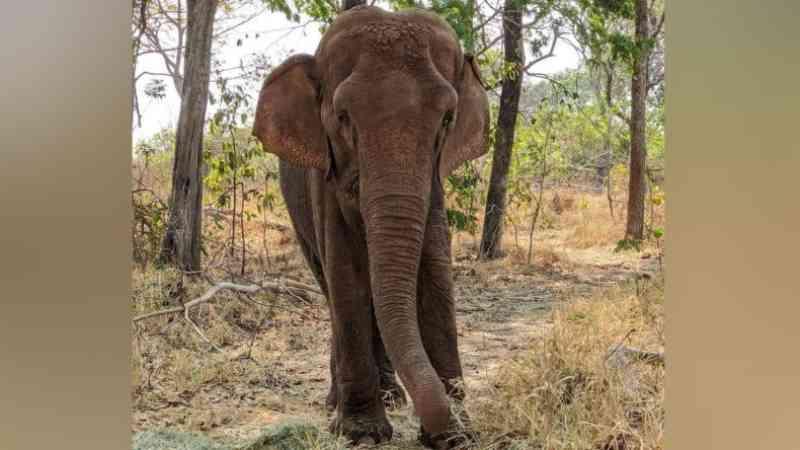 Perda de peso de Bambi nos últimos anos preocupa veterinários do Santuário de Elefantes