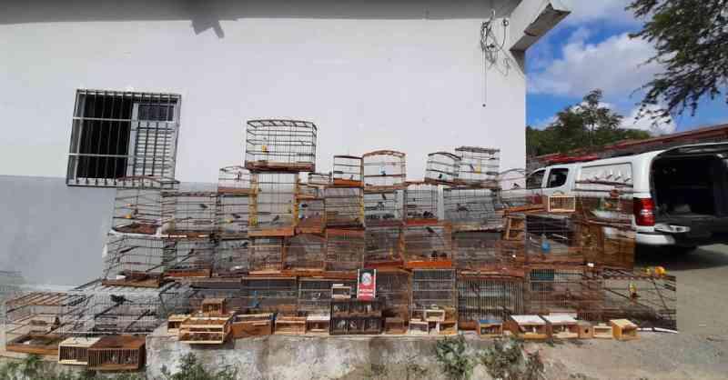 Mais de 100 pássaros são apreendidos pela PM na Feira da Prata, em Campina Grande, PB