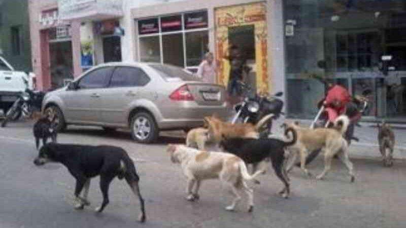 Após gastar fortuna com centro de zoonoses, Prefeitura de Itaporanga (PB) negligencia cães abandonados